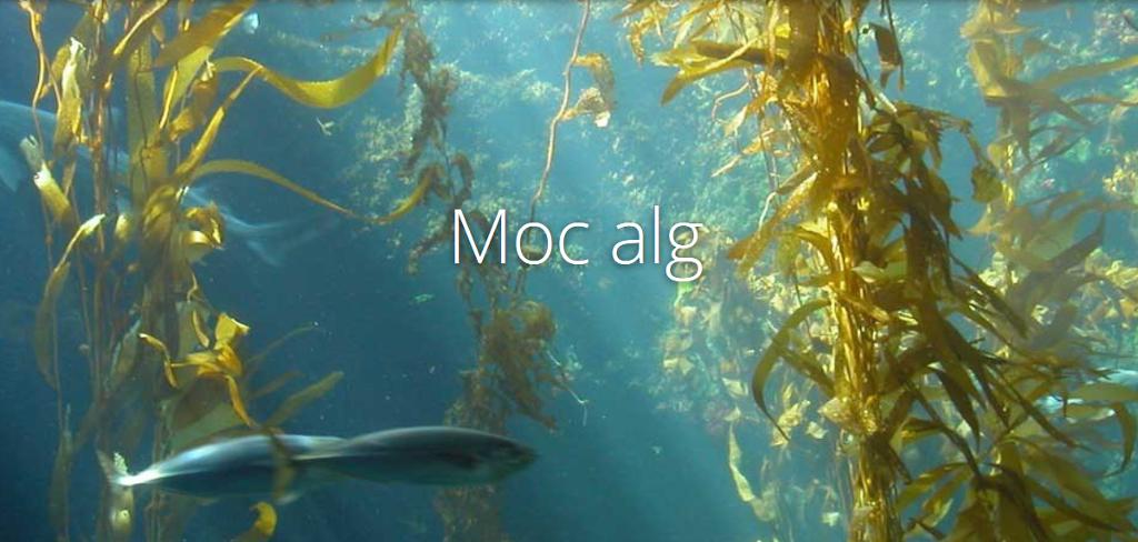 Odkryj moc alg w swoim ogrodzie