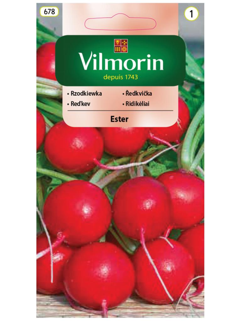 NOWOŚĆ! - Rzodkiewka 'Ester' 5 g - Vilmorin